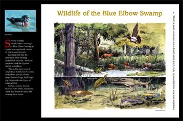 Blue Elbow Swamp