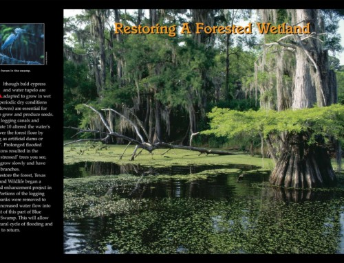 Photo 3 – Blue Elbow Swamp