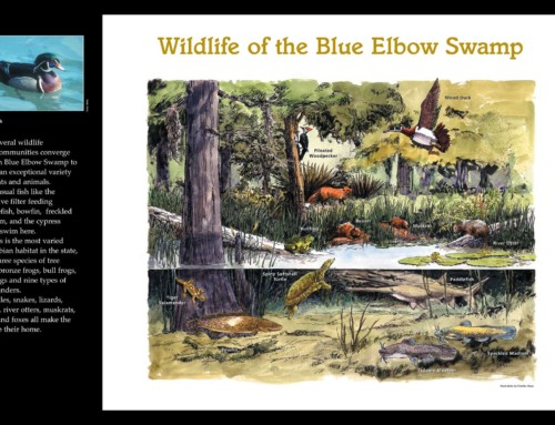Photo 5 – Blue Elbow Swamp